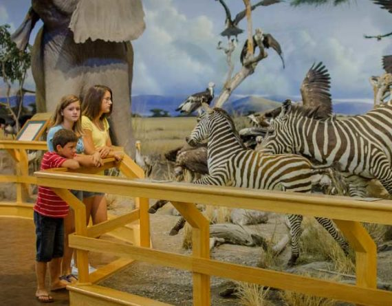 Children viewing the African nature display at Cabela's in Owatonna, MN.