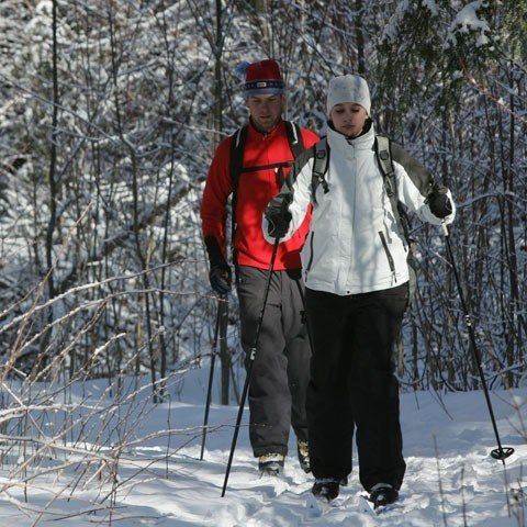 wooded-cross-country-skiing